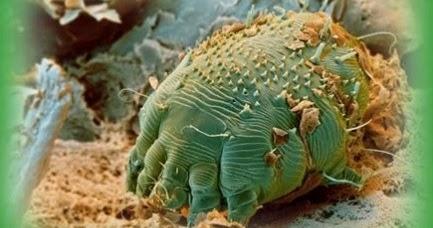 curățarea completă a tuturor corpurilor parazite