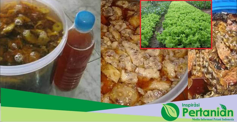 Extrak kulit nanas sebagai pupuk organic cair untuk tanaman