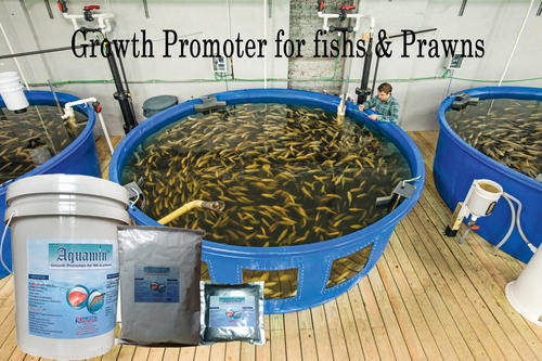 Natural Aquaculture Feed Supplement for health and growth