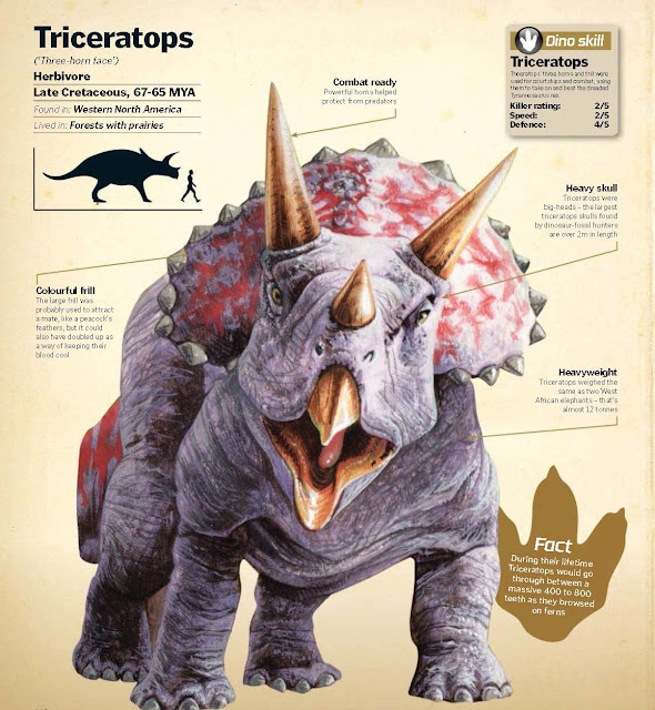 Triceratops ('Three-horn face')  Herbivore Late Cretaceous, 67-65 MYA, Found in: Western North America, Lived in: Forests with prairies.  Combat ready: Powerful horns helped protect from predators. Colourful frill: The large frill was probably used to attract a mate, like a peacock's feathers, but it could also have doubled up as a way of keeping their blood cool. Heavy skull: Triceratops were big-heads – the largest triceratops skulls found by dinosaur-fossil hunters are over 2m in length. Heavyweight: Triceratops weighed the same as two West African elephants – that's almost 12 tonnes. Dino skill Triceratops' three horns and frill were used for courtships and combat, using them to take on and beat the dreaded: Tyrannosaurus rex. Triceratops Killer rating: 2/5, Speed: 2/5 Defence: 4/5.