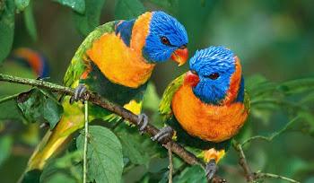 30 Tane Güzel Kuş Resimleri