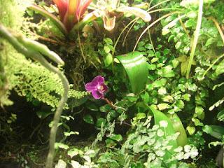 plantas para terrario