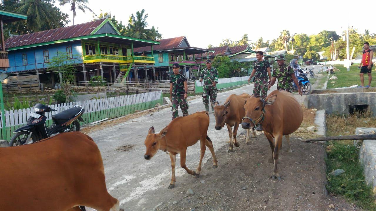 Wujud Komsos, Personel TMMD Bantu Warga Masukkan Sapi di Kandang