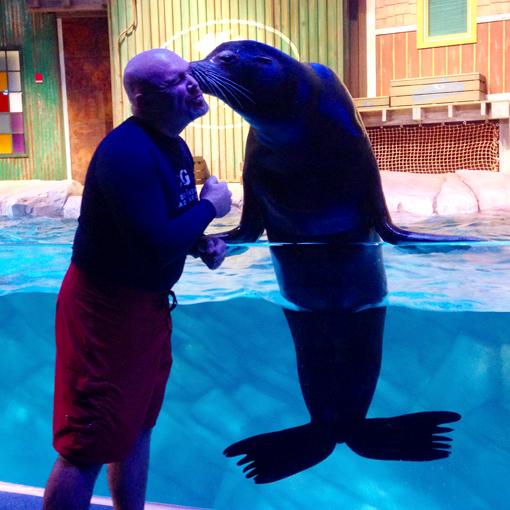 California Sea Lion Experience | Georgia Aquarium
