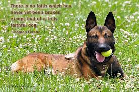 There is no faith which has never yet been broken except that of a trusty faithful dog.