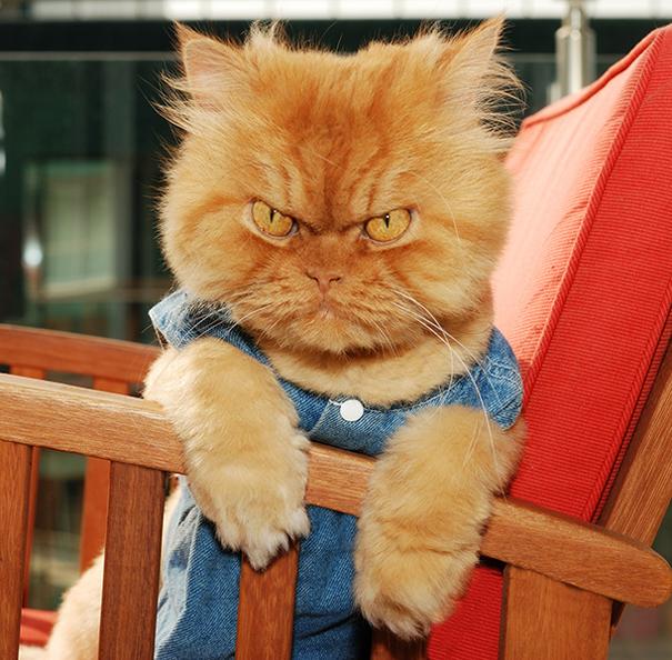 Garfi, The World's Angriest Cat-2