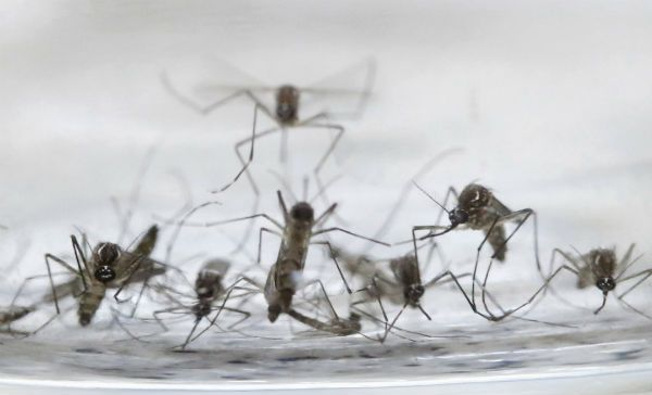 OMS reporta el primer caso de síndrome Guillain-Barré por zika
