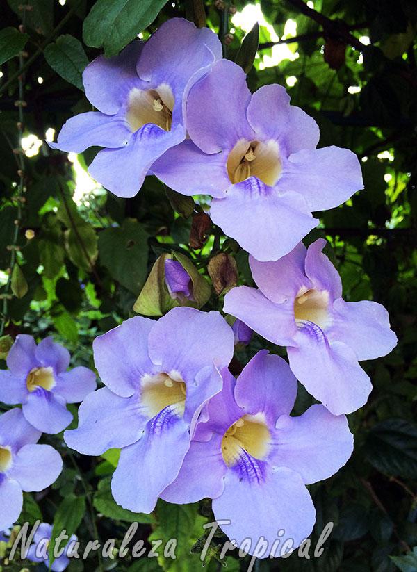 Naturaleza Tropical Galer A De Flores De Plantas