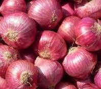bibit bawang merah