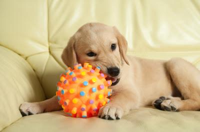 Ideas para cachorros