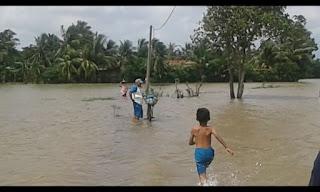 Ratusan Hektar Sawah dan Rumah di Tempuran Terendam Banjir