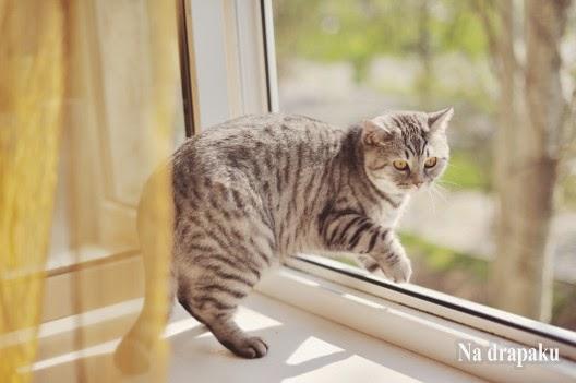 Koty nie zawsze spadają na cztery łapy!