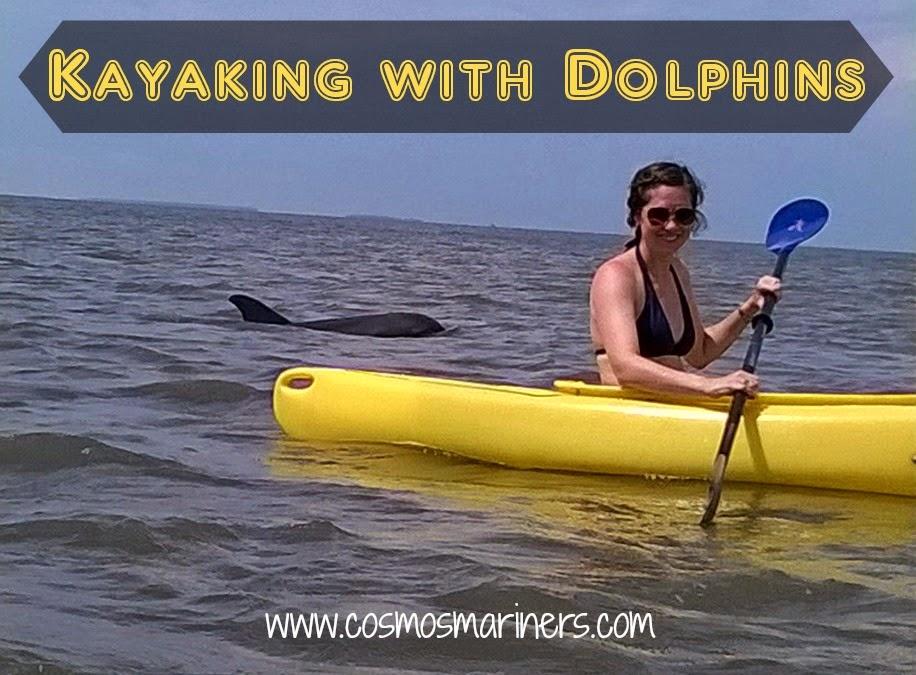 Edisto Island dolphins