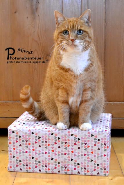 Katze Mimi mit einem Geschenk an Valentinstag