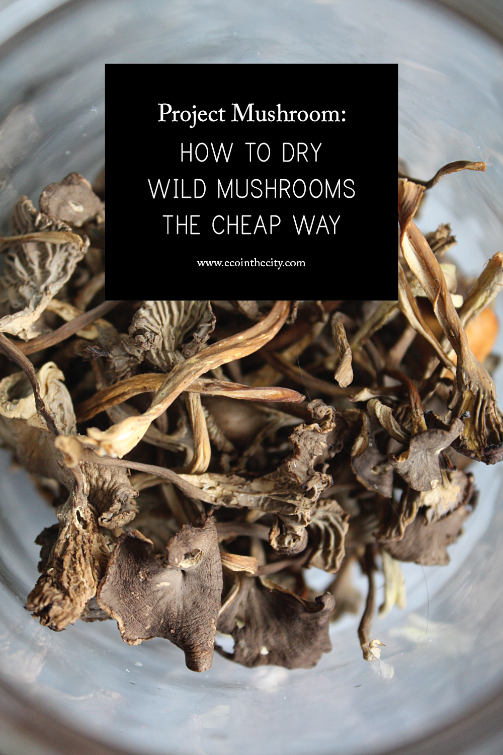 Project Mushroom: How To Dry Wild Mushrooms The Cheap Way Book Trailer: How  To Eat Fried Worms