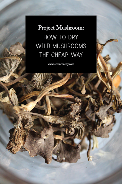 Project mushroom: How to dry wild mushrooms the cheap way
