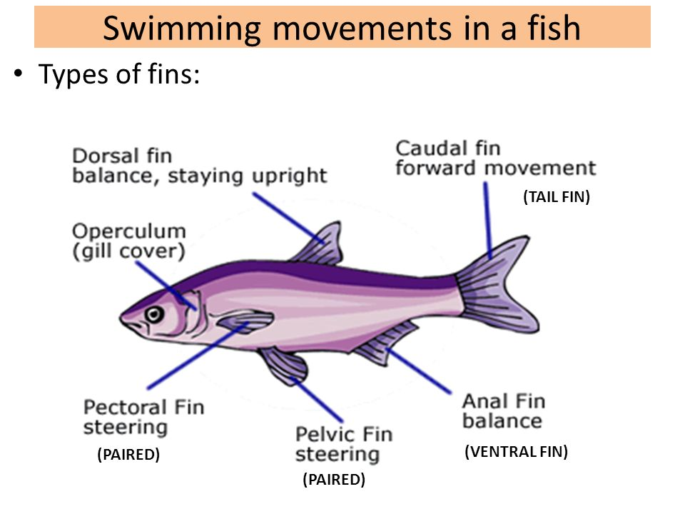 Biology 10: Topic 12a: Fish (Class Pisces)