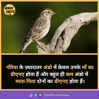 about sparrow in hindi