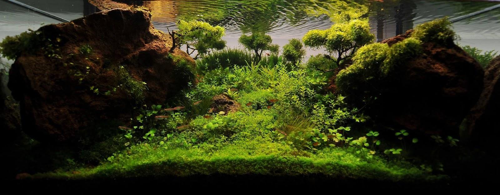 Một hồ thủy sinh hoàn chỉnh có cây cỏ bợ 4 lá