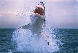 New Jersey Shark