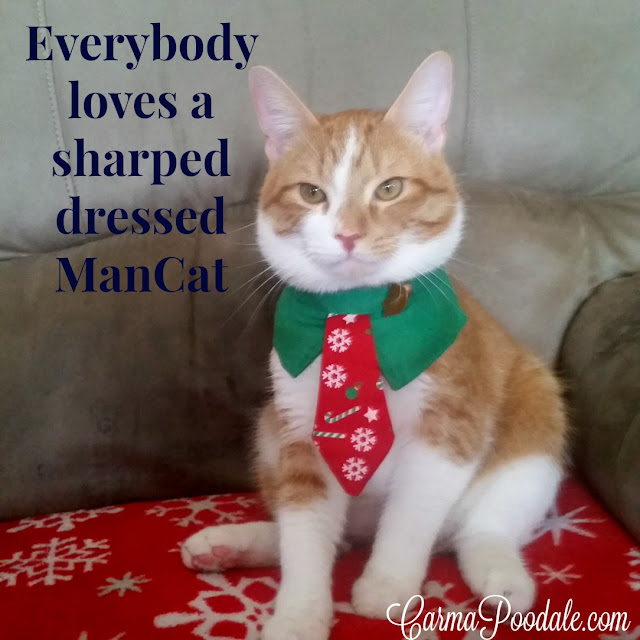 Orange tabby in a Christmas Tie. CarmaPoodale #Cats