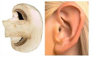 Mushroom is linked with ear