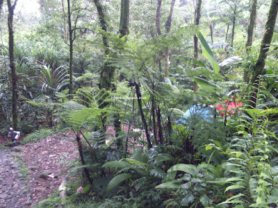 Camping Ground Kawah Ratu Gunung Salak Bogor