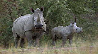 Employee and four poachers arrested at Kruger National Park