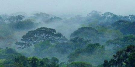 taman nasional gunung palung kalbar taman nasional gunung palung kalimantan taman nasional gunung palung melindungi