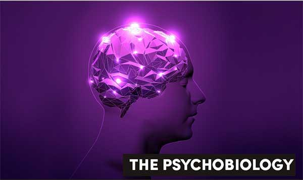 Benarkah Olah Raga Menjadikan Volume Otak Lebih besar