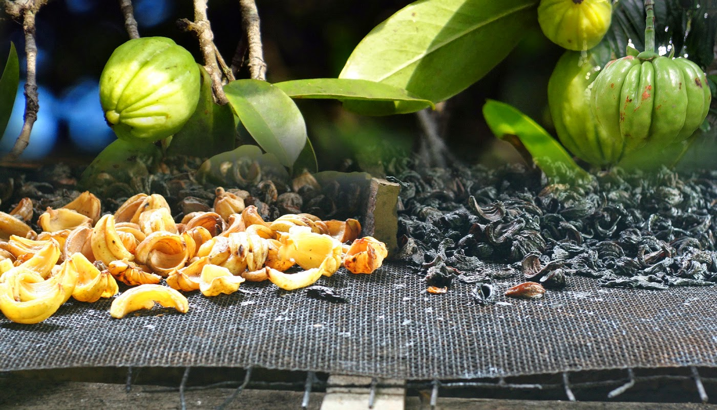 Как се пие Гарциния камбоджа-garcinia loss
