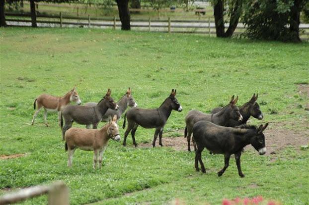 Amazing Donkey Facts in Hindi