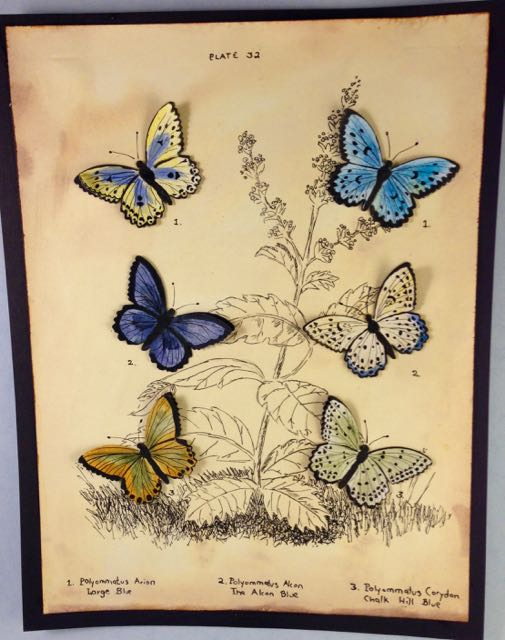 Butterfly Vintage Print with hand drawn background