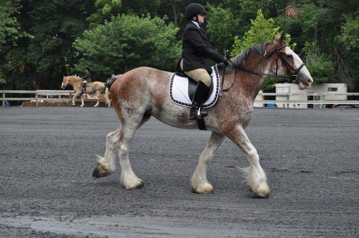 Gentle Giants Draft Horse Rescue Howard County Fair