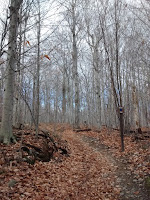 Sentier Rocky mont-saint-hilaire l'automne