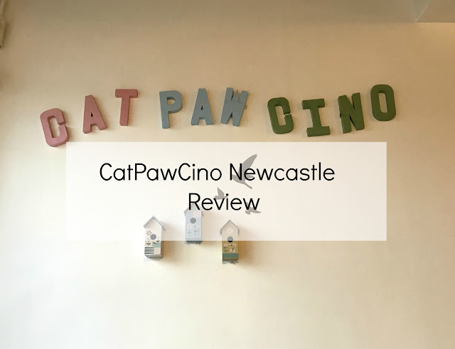 catpawcino cat cafe Newcastle upon tyne review