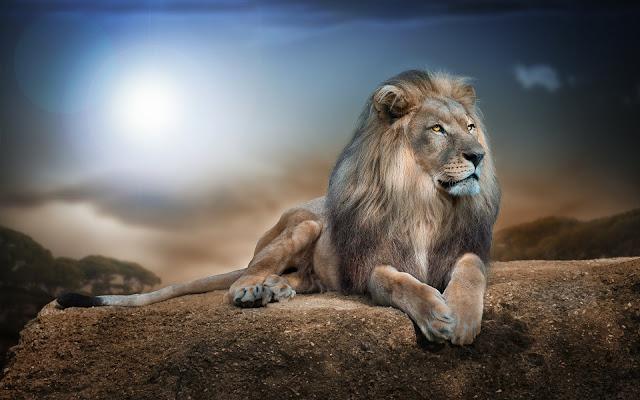 Hình nền sư tử đẹp dũng mãnh nhất - Lion Full HD