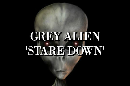 Grey Alien 'Stare Down'
