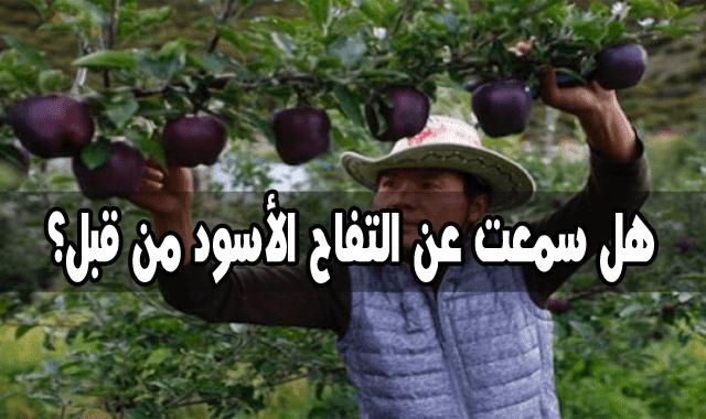 اصناف التفاح, الوان التفاح, معلومات عن التفاح, انواع التفاح وفوائده, اي انواع التفاح اكثر فائدة, اي انواع التفاح افضل, انواع التفاح واسمائها, التفاح,تفاح,التفاح الجبلي,فوائد,اكل التفاح,زراعة التفاح,ثمرة التفاح,شجر التفاح,كيف زراعة التفاح,شجرة التفاح