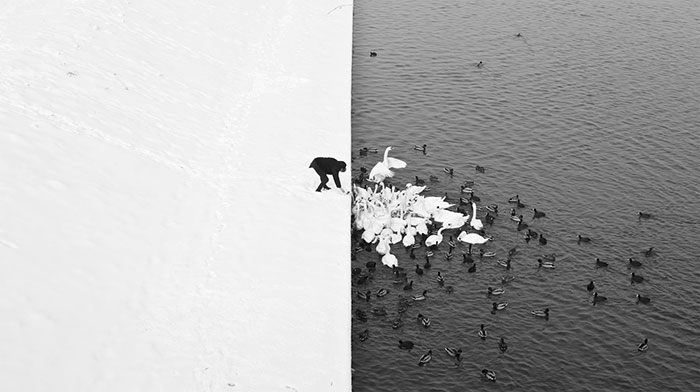 36 Unbelievable Pictures That Are Not Photoshopped - A Man Feeding Swans In The Snow