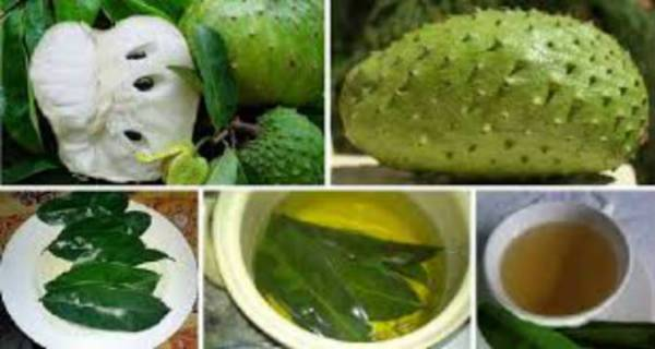 YOU WILL NEVER BELIEVE THIS BUT SOURSOP LEAVES CAN CURE CANCER
