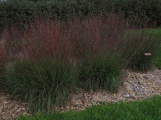 ornamental grass in landscape