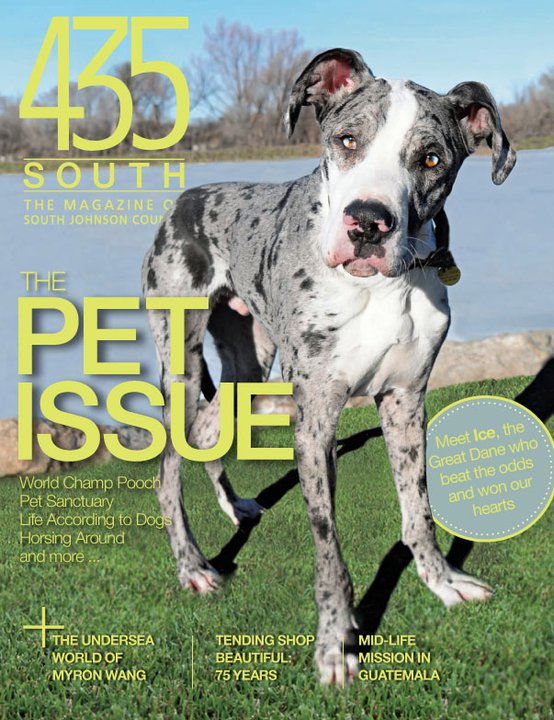 Featured in 435 South Magazine's Pet Issue – Kansas City Dog