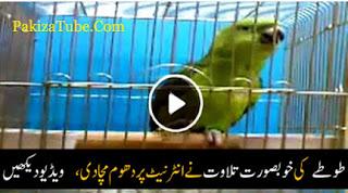 Parrot Doing Tilawat Quran Pak