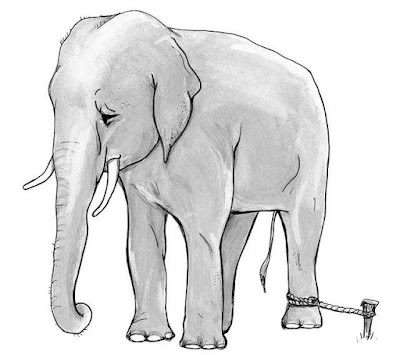 elephant tied with a rope