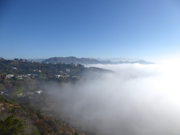 Hollywood Hills misty Runyon Canyon