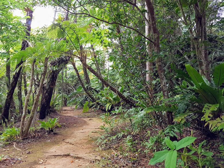 園內的原始森林