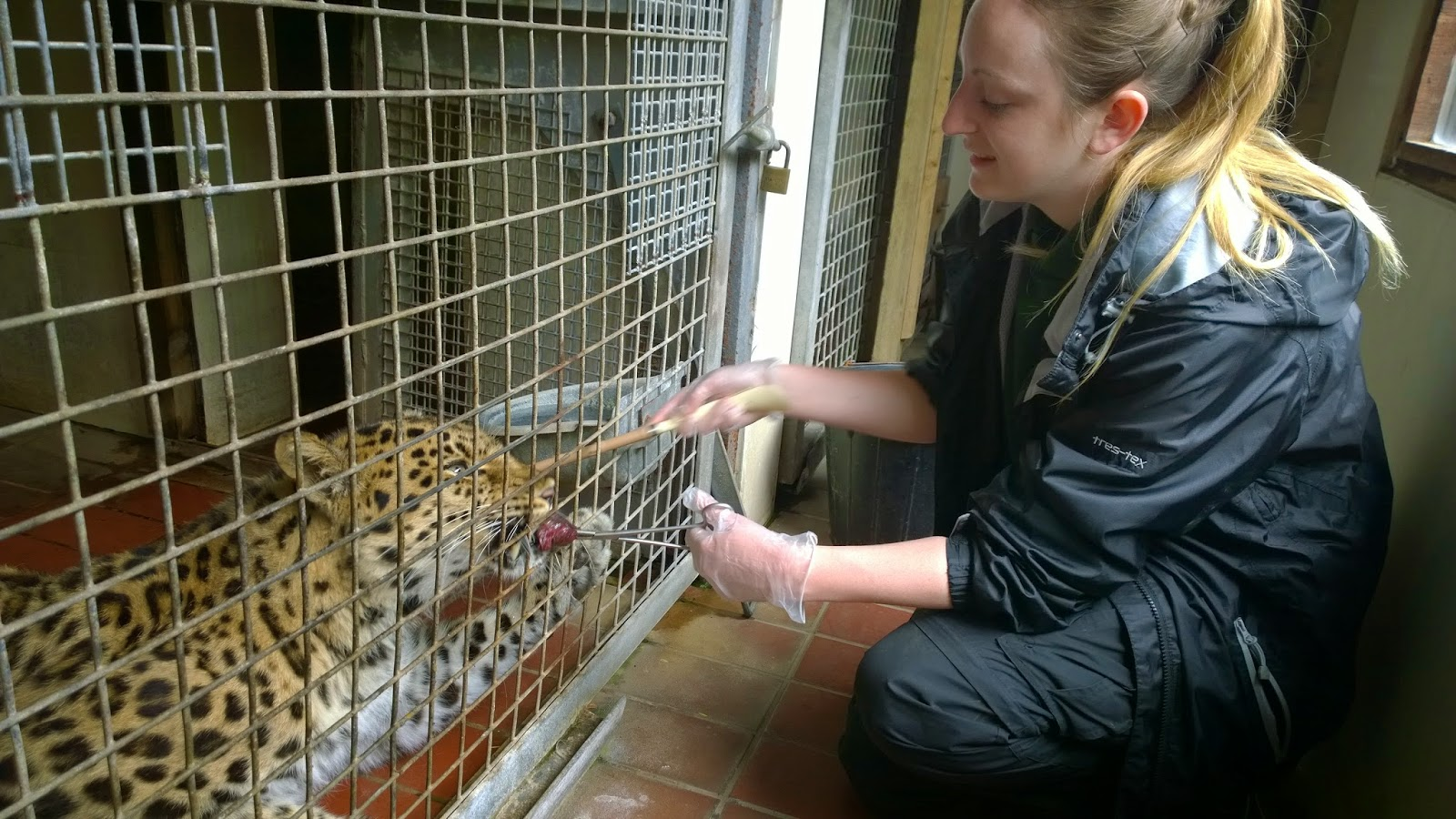 Diary Of A Zoo Keeper Getfit4bigcats