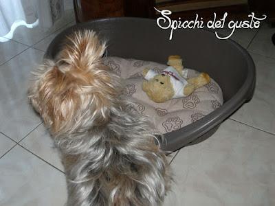 Zeus nella sua nuova cuccia Bama