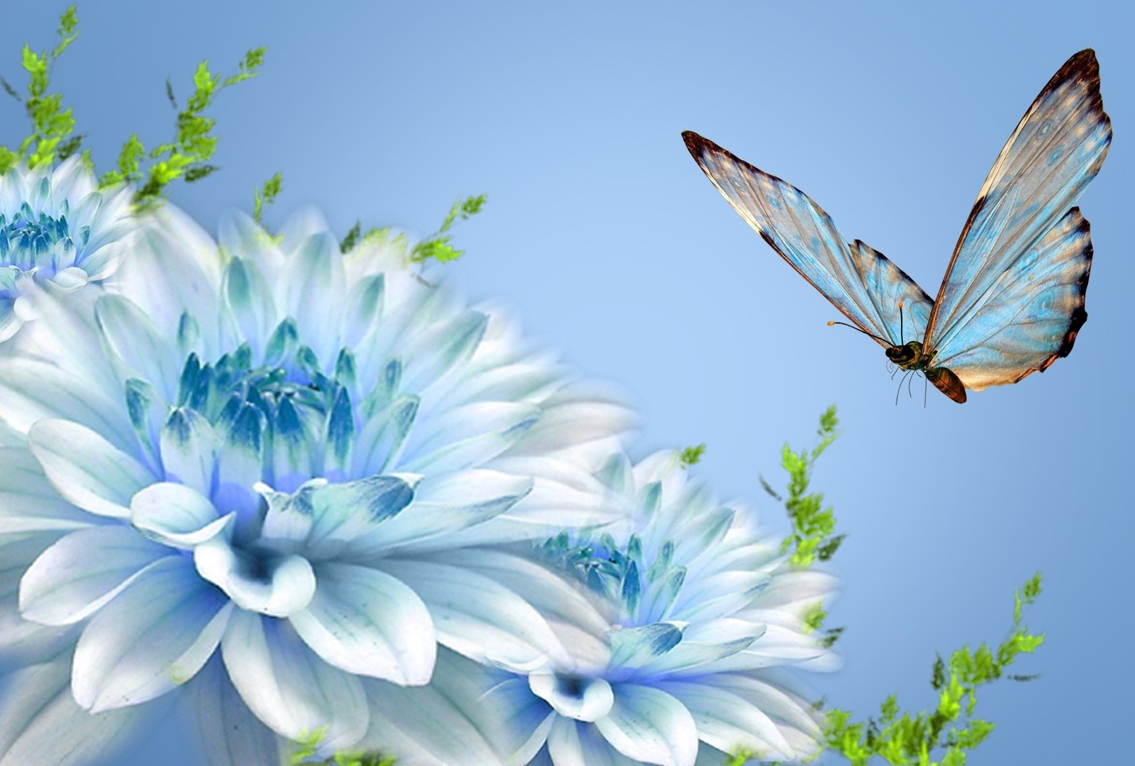 Free Cute Fall Wallpapers Butterfly Wallpapers Desktop Wallpapers